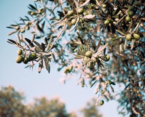 F Nakar Hotel Olive Oil Mallorca