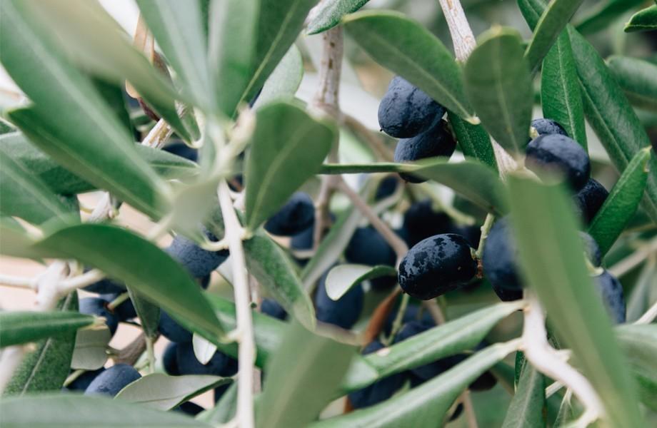 Nakar Hotel Palma Mallorca Olive Oil Spain