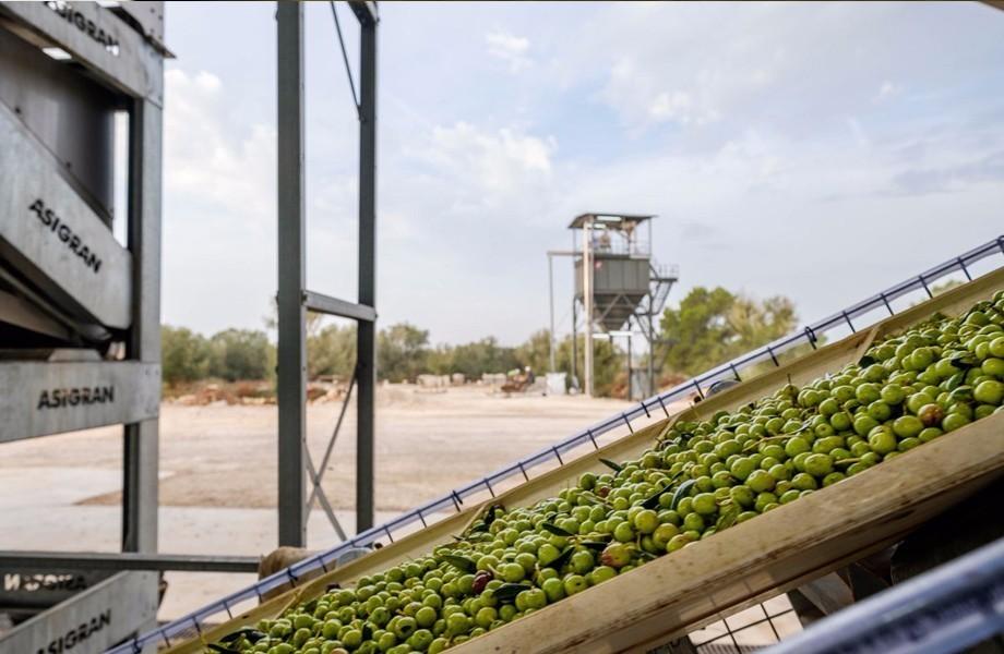 Nakar Hotel Son Mesquida Olive Oil Mallorca